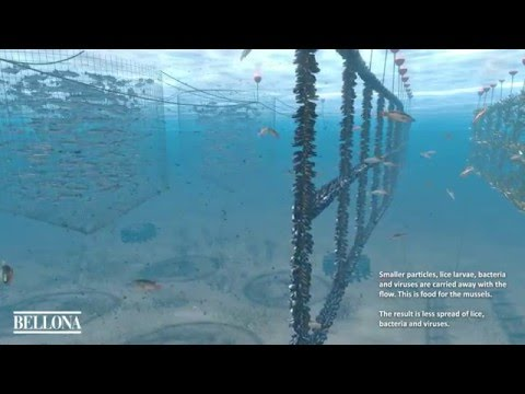 Ocean Forest - Lerøy Seafood Group and Bellona - English version