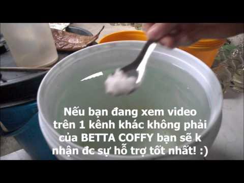 Hướng dẫn pha nước nuôi cá Lia Thia luôn khỏe - ít bệnh | BETTA COFFY