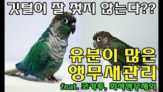 앵무새정보_유분이 많은 앵무새관리(feat. 코카투, …