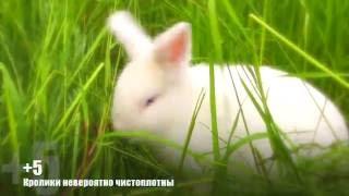 Стоит ли заводить кролика? Мое мнение - плюсы и минусы