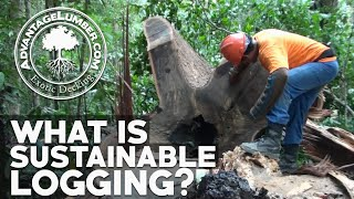 What is Sustainable Logging? The Benefits of Well-Managed Forestry to the Green Economy