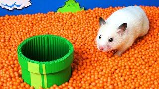 Hamster escapes the Super Mario maze in real life