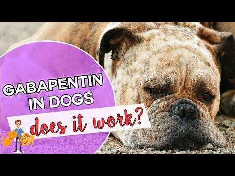 Gabapentin For Dogs Is It Dog Pain Killer That Works