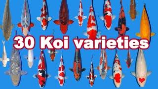 30 Koi Fish Varieties, Types And Characteristics