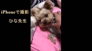 【大分グッピーファンクラブ】(メインチャンネル) https://www.youtube....