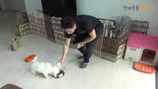 강아지 배변�육, 배변훈련 2주 마스터하기 - dog potty training