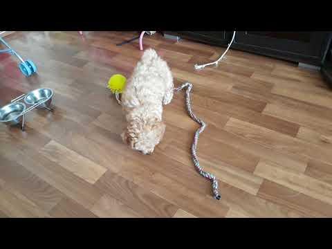 Вопрос: Почему собака стала писать мимо лотка?
