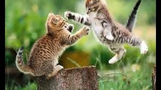 Приколы, животные жгут !!! Ржака 2015 (funny video about animals 2015)