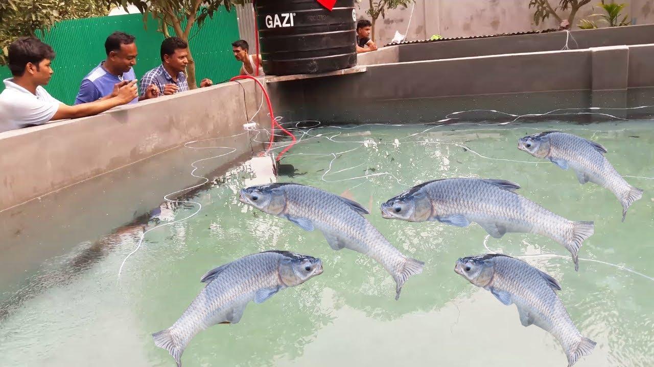 Indoor Ras Homemade Cement Fish Tank Pond 15 20 Feet Youtube