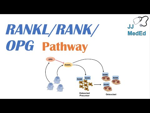 Introduction to RANKL | RANK | OPG Signaling Pathway
