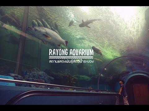 Rayong Aquarium สถานแสดงพันธุ์สัตว์น้ำระยอง