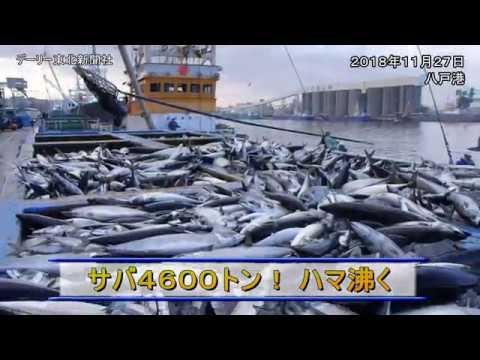 八戸港でサバ4600トン水揚げ2018/11/27