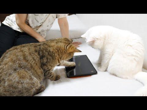 猫用アプリに熱中する母親と姉妹猫!