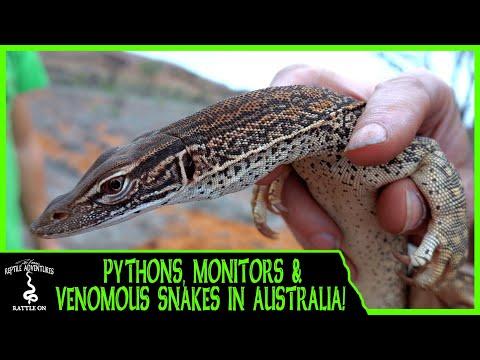 FINDING PYTHONS, MONITOR LIZARDS & VENOMOUS SNAKES IN AUSTRALIA!