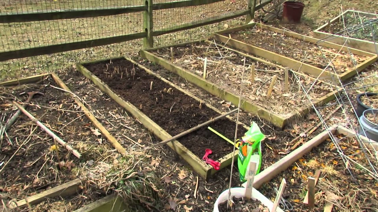 How to Fertilize & Prepare Your Asparagus Beds in the Spring: Feed ...