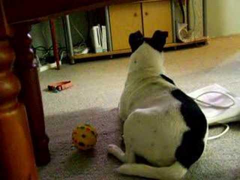Dog licking carpet - YouTube