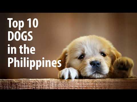Top10 Dogs Philippines
