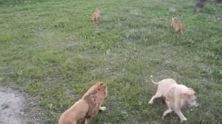Парк львов