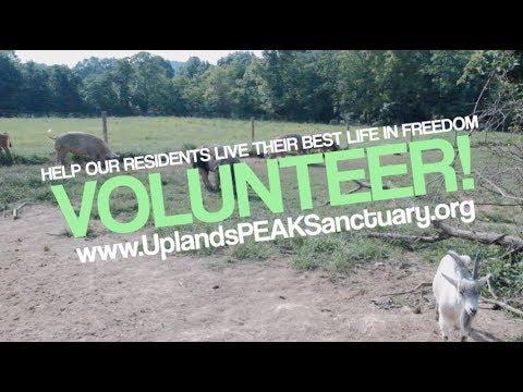 Volunteer at Uplands PEAK Sanctuary