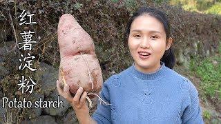 纯手工制作的红薯淀粉,可以做各种神奇的家常菜,你吃过吗?