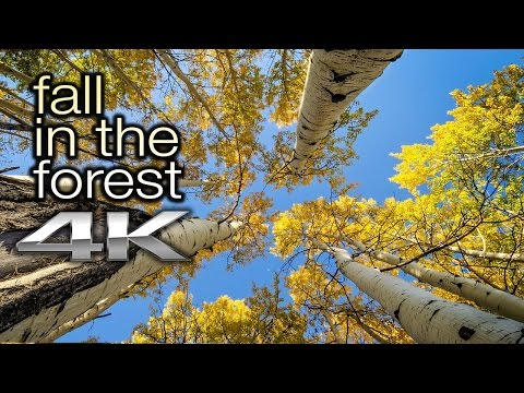 """2 HRS FALL LEAVES in 4K: """"Fall in the Forest"""" Nature Relaxation™ Video Screensaver (+Nature Sounds)"""