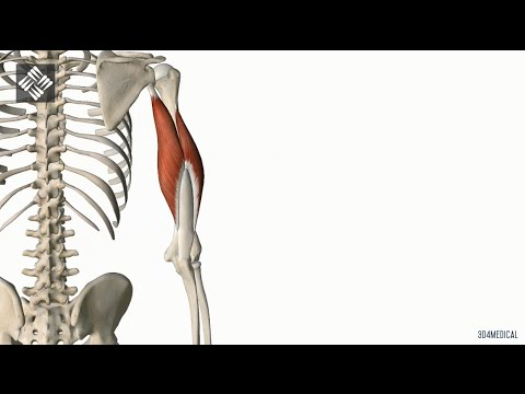 Tríceps Braquial - YouTube