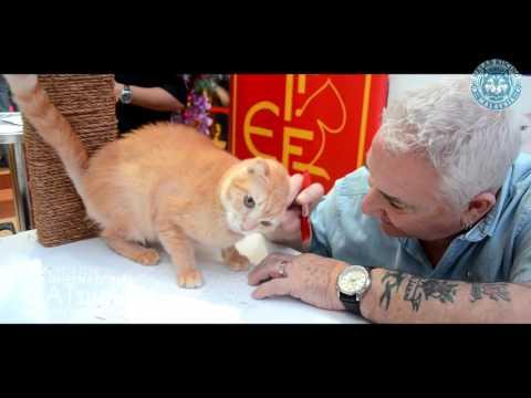 Kelab Kucing Malaysia/Fife/Nature's Protection | Craft Pets Day | International Cat Sow 2016