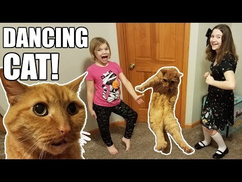 Dancing Cat Won't Stop!  Funny & Cute!  Babyteeth More