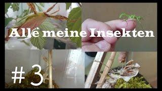 Alle meine Insekten #3 | Insekten TV