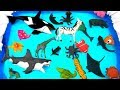 Learn Zoo Animals and Wild Sea Animals in Blue Water Learn Colors For Kids