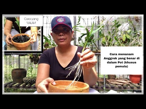 Cara menanam Anggrek yang benar untuk pemula, biar anggreknya tumbuh sehat, subur & berbunga.