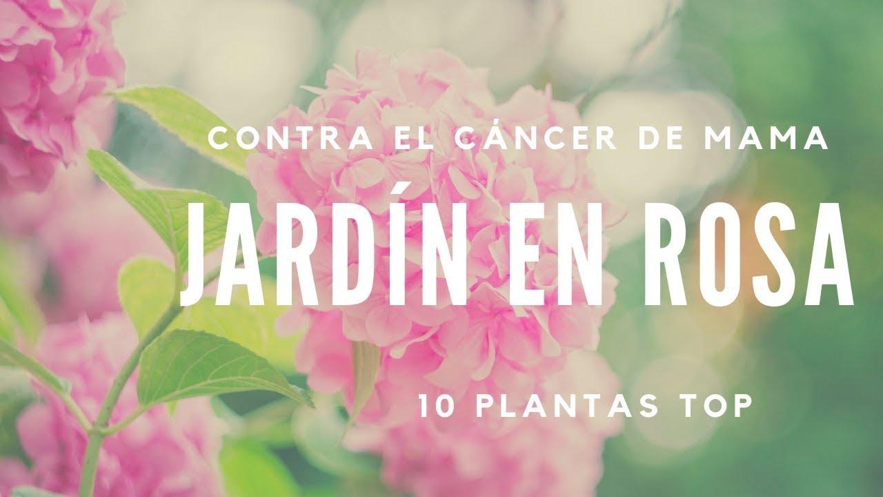 JARDÍN ROSA CONTRA EL CÁNCER DE MAMA. Flores en color rosa y sus cuidados