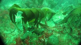 Underwater Video of the remains of the Grimsby Trawler, Sudero.