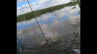 рыбалка на паук подъёмник мелкий сазан кишит