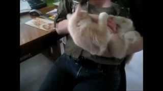 Funny Cats Compilation April 2013, smieszne koty kwiecien 2013