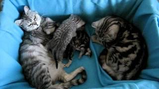 Bayleis a Monthy s koťátky
