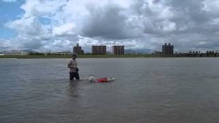 Swimming By Siberian Husky Hana, July 16th 2012 Japan .wmv