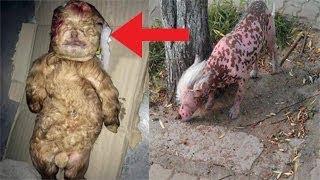اغرب حيوان على وجة الارض آثار رعب سكان الصين!!
