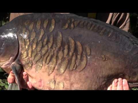 Carp Barbel Catfish Fishing Line Gardner Tackle Heavy Plummet Leadcore Leader