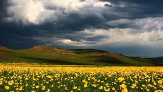 Растения и животные зоны степей