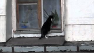 Кот заблудился на крыше