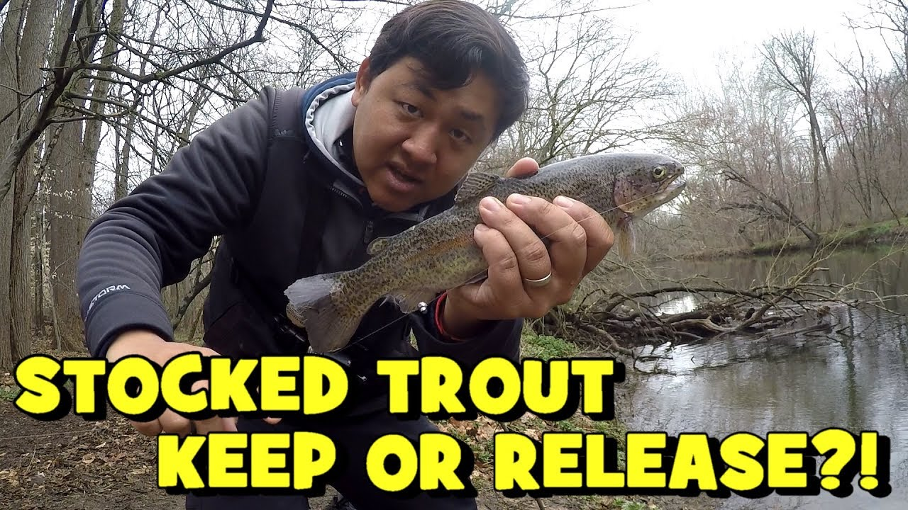 Should you harvest or release stocked trout northeast for Extreme philly fishing
