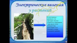 видео Презентация по физике