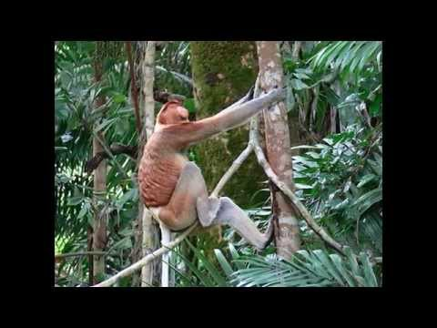 Batang Ai National Park - Tourist Attractions in Malaysia