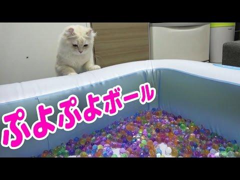 ぷよぷよボール風呂でマロン大興奮!