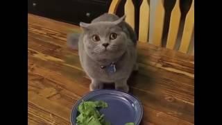 Когда твой хозяин зашёл а ты кушаешь чужую еду