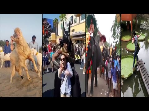 Most amazing fun and interesting videos in the world you need to watch*9-life666