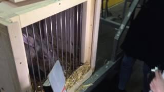 Трубкозуб из екатеринбургского зоопарка переедет к собратьям в Чехию