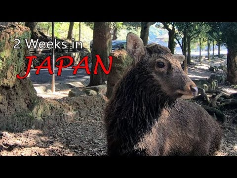 Streets of Tokyo, Osaka, Nara, Kyoto, Disneyland JAPAN travel trip HD 4K gopro 6 and karma grip