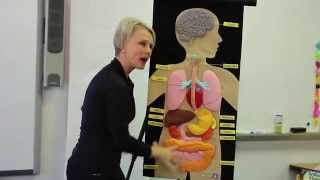 (Why is too much * Sugar * bad for my body?  - Insane Body Science w/ Ms. Carmen)